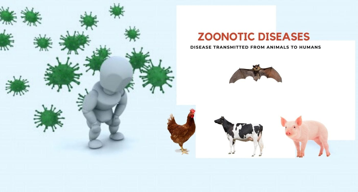 Zoonotic Diseases (Zoonosis): Disease Passed from Animals to Humans